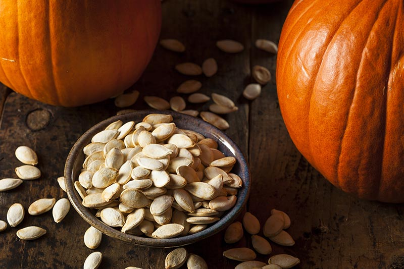 A close up horizontal image of a small ceramic bowl containing cleaned, roasted seeds, set on a wooden surface. In the background are two ripe orange pumpkins in soft focus.