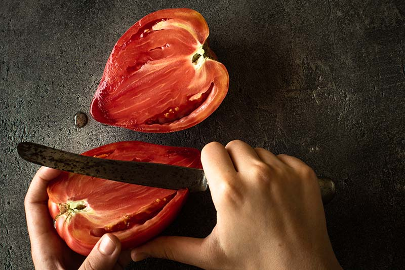 A close up of two hands from the bottom of the frame, slicing a bright red tomato, on a dark gray background.