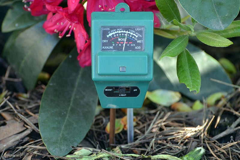 A close up of a soil pH and moisture meter placed in the soil with a flower in soft focus in the background.