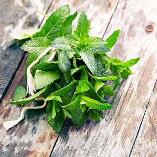 A close up of a bunch of freshly harvested Mentha spicata leaves, tied together with string and placed on a wooden surface.