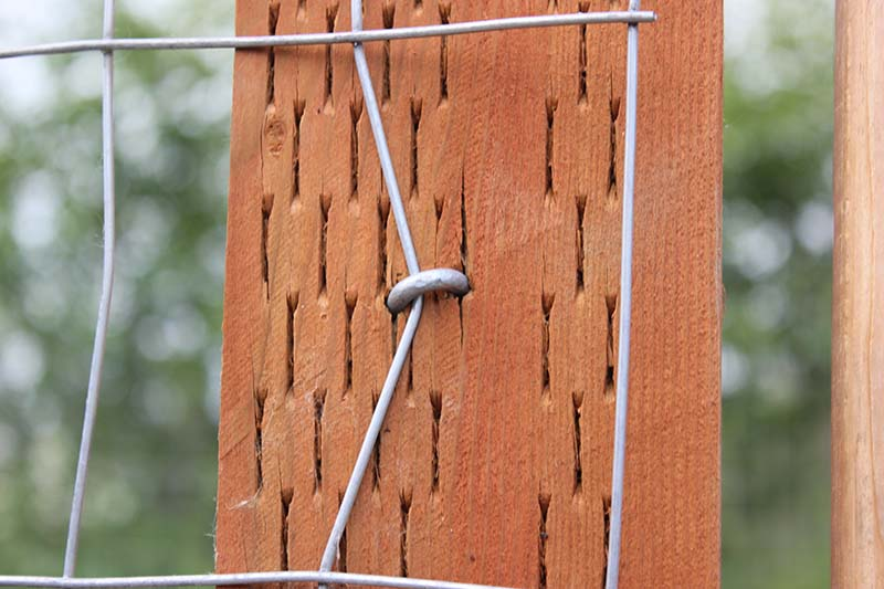 A close up of a fence post showing the placement of fence staples on wire mesh.