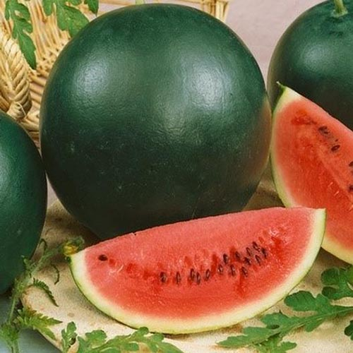 A close up, square image of a slice of watermelon, showing the bright red flesh, in contrast to the dark green skin of the whole fruit pictured in the background.