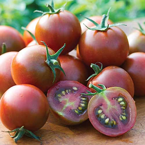 A close up of a number of freshly harvested 'Sunchocola' cherry tomatoes, with one fruit cut in half, set on a wooden surface, pictured on a soft focus background.