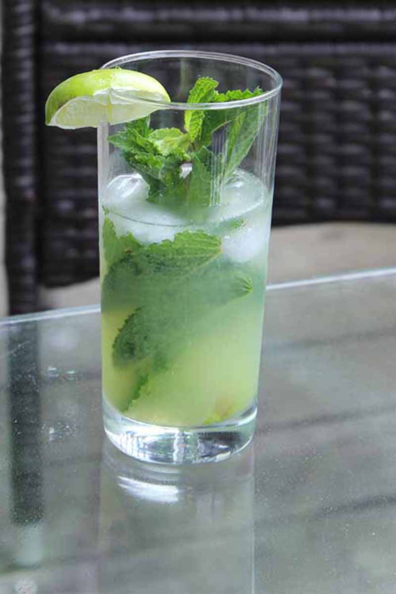A close up vertical picture of a fresh tomatillo mojito set on a glass surface with fresh mint and a slice of lemon.