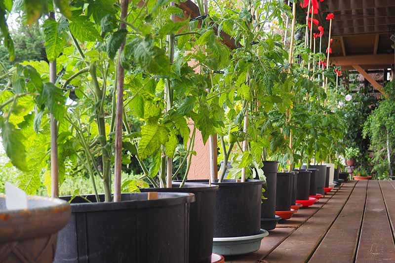 A close up of a row of black pots with plants growing on a wooden deck.