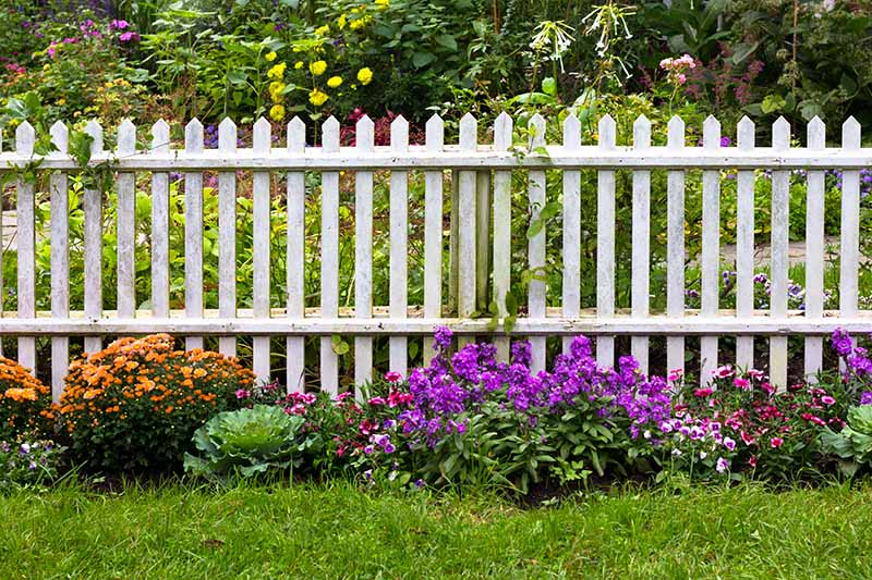 A garden scene with a white picket fence, flowers and lawn in the foreground, and various flowering shrubs in soft focus in the background.