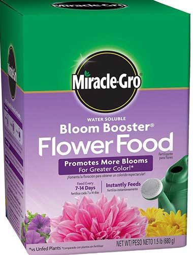 A close up of the green and purple packaging of MiracleGrow Bloom Booster Flower Food pictured on a white background.