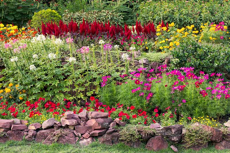 A horizontal image of a colorful flower border in a summer garden with a variety of colorful blooms.