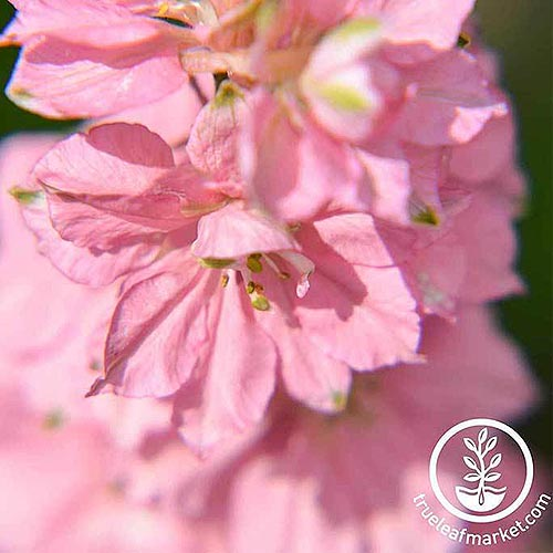 A close up square image of a bright pink flower pictured in bright sunshine on a soft focus background. To the bottom right of the frame is a white circular logo and text.
