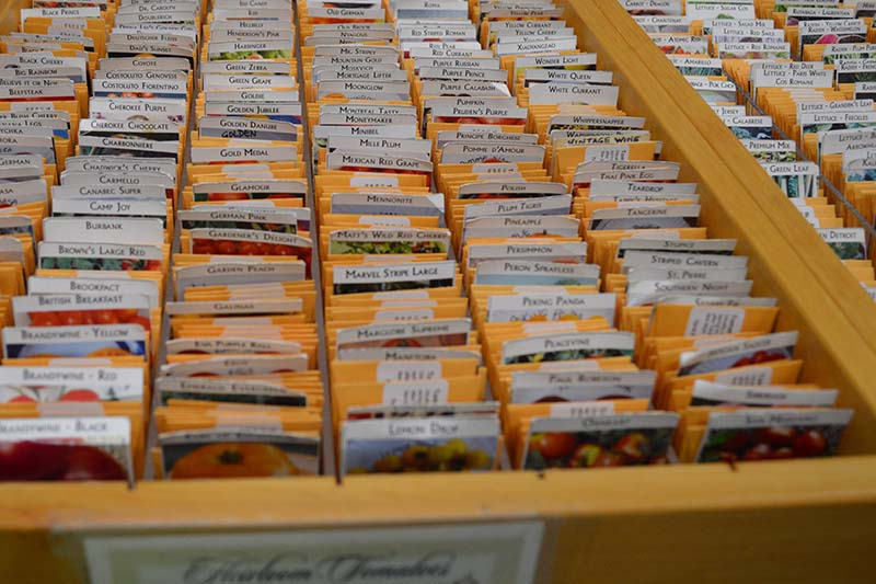 A close up horizontal image of a drawer containing a selection of heirlooms in small, labelled packets.
