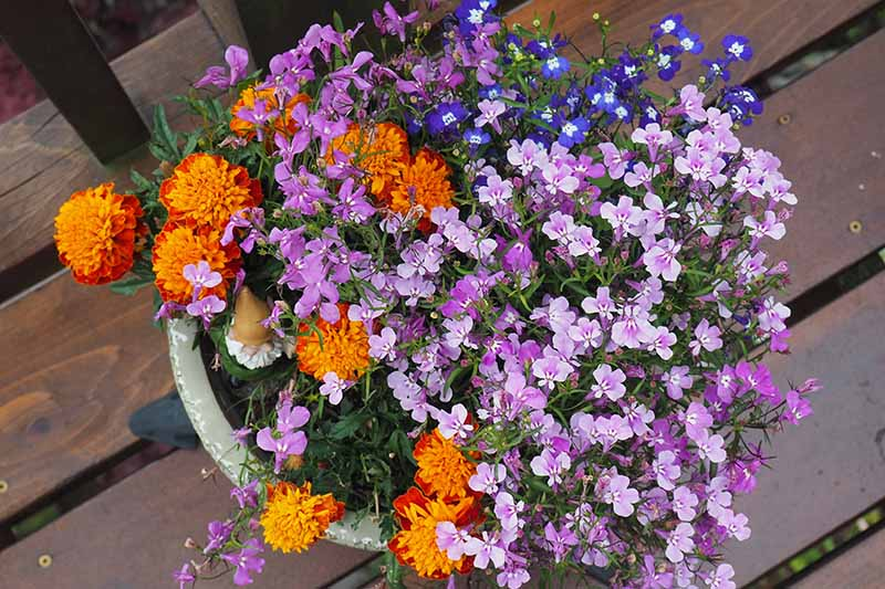 A close up, top down horizontal image of a container planted with marigolds and blue and purple lobelia spilling over the edge, set on a wooden surface.