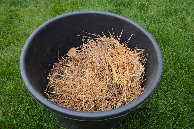 A close up horizontal image of a black bucket containing straw set on a lawn.