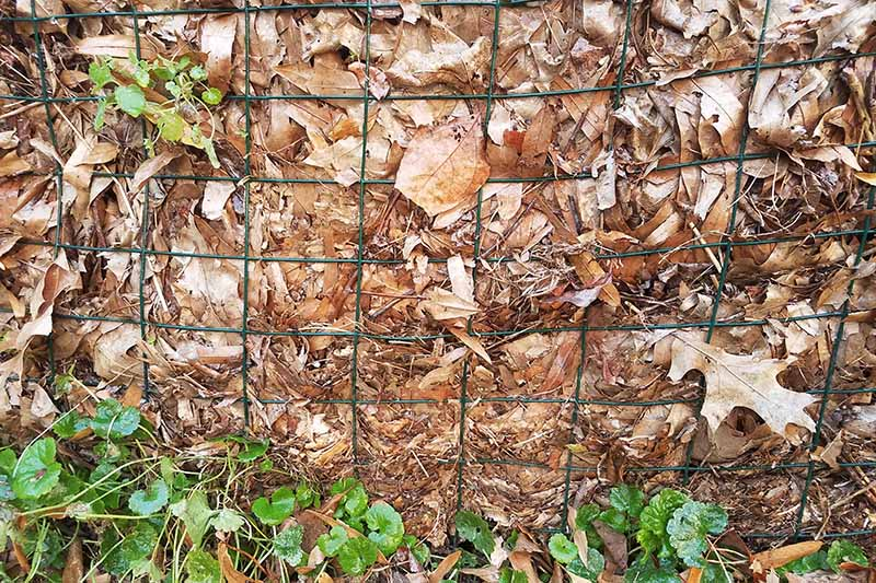 A close up horizontal image of a compost pile with dried autumn leaves behind a wire fence.