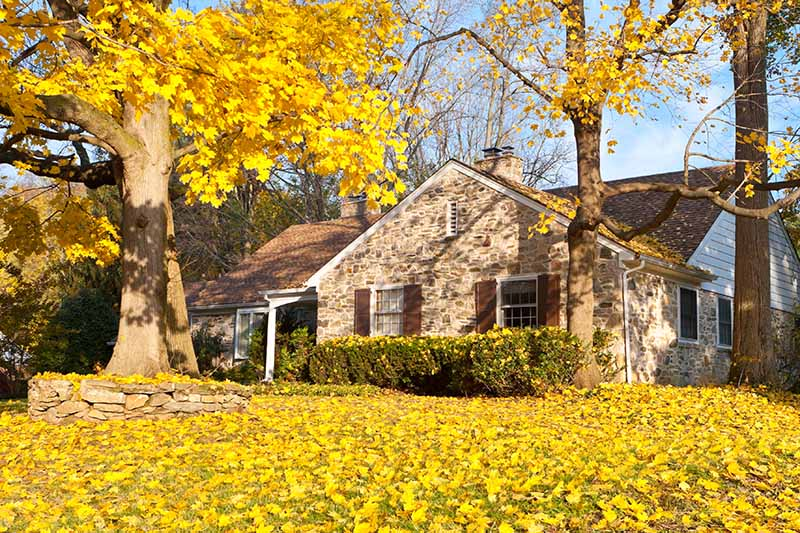 A horizontal image of a house in the fall, with yellow leaves all over the lawn, pictured in bright sunshine.