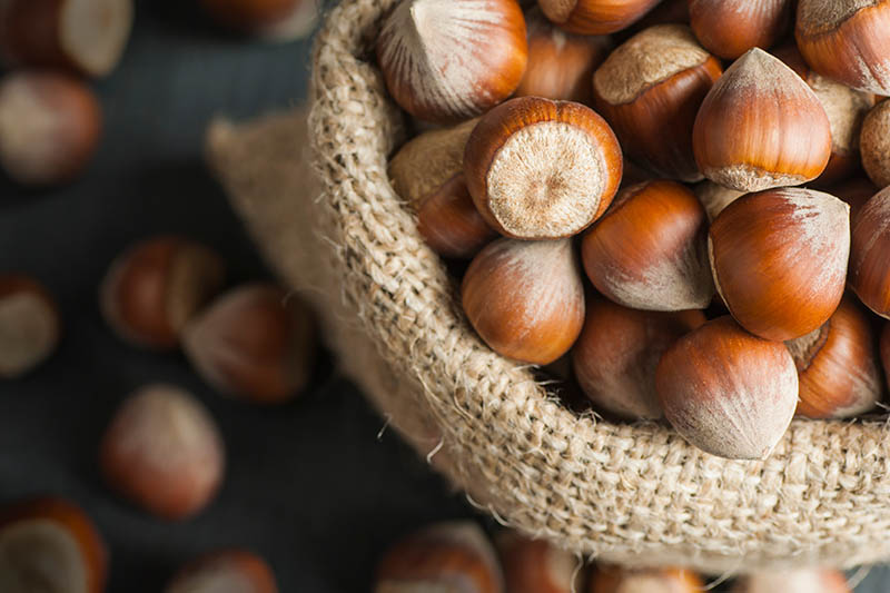 A close up horizontal image of a wicker basket filled with freshly harvested, ripe hazelnuts, on a soft focus background.