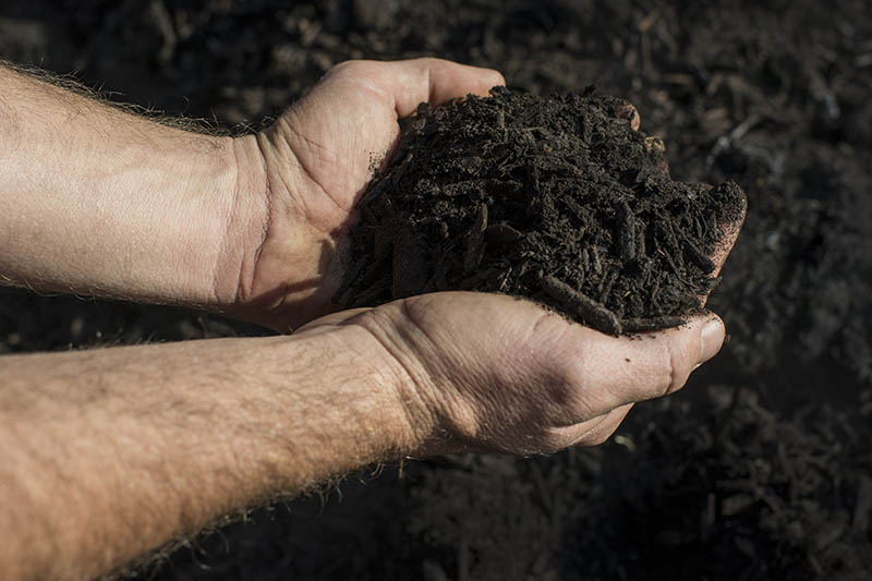 A close up horizontal image of two hands from the left of the frame holding a handful of dark, rich compost.