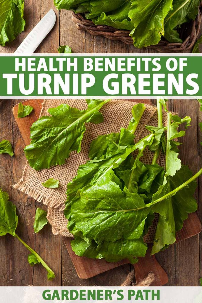 A vertical close up image of a wooden chopping board with a piece of burlap fabric and turnip greens scattered around on a wooden surface with a knife in the background. To the top and bottom of the frame is green and white printed text.