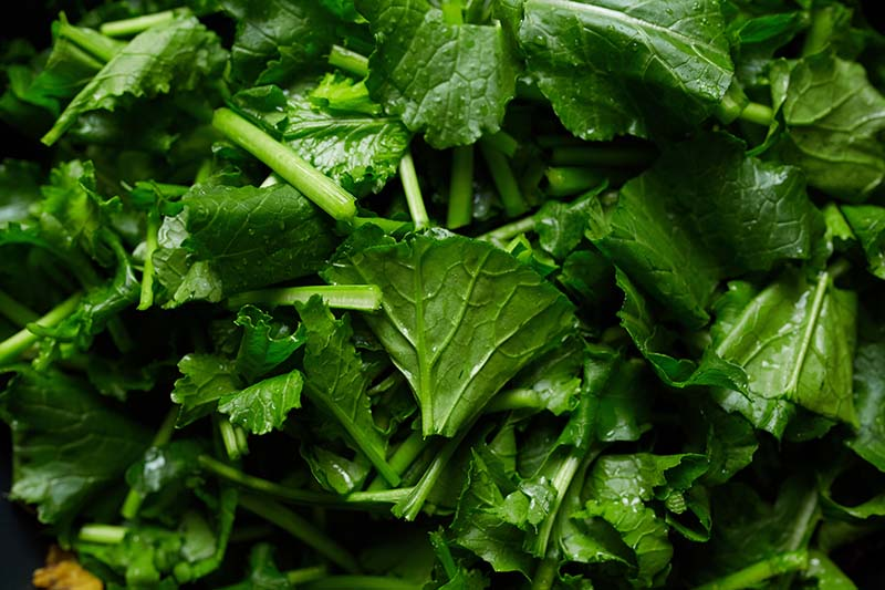 A close up horizontal image of lightly sauteed fresh leafy green vegetables.