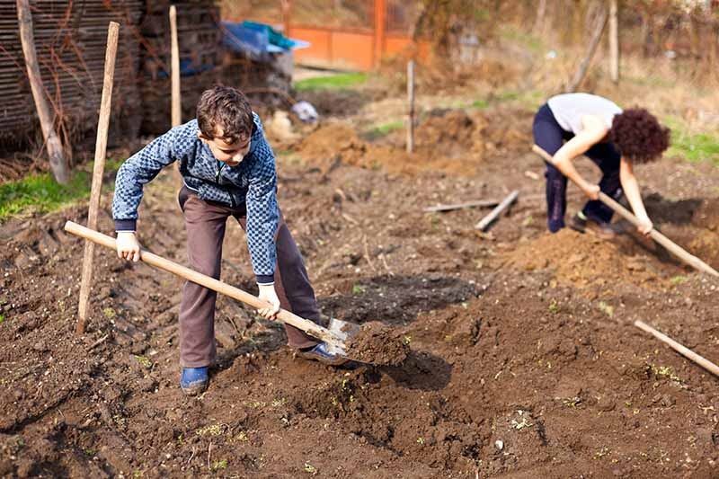 A horizontal image of kids digging holes in the rich soil in the garden ready for planting flowers or vegetables.