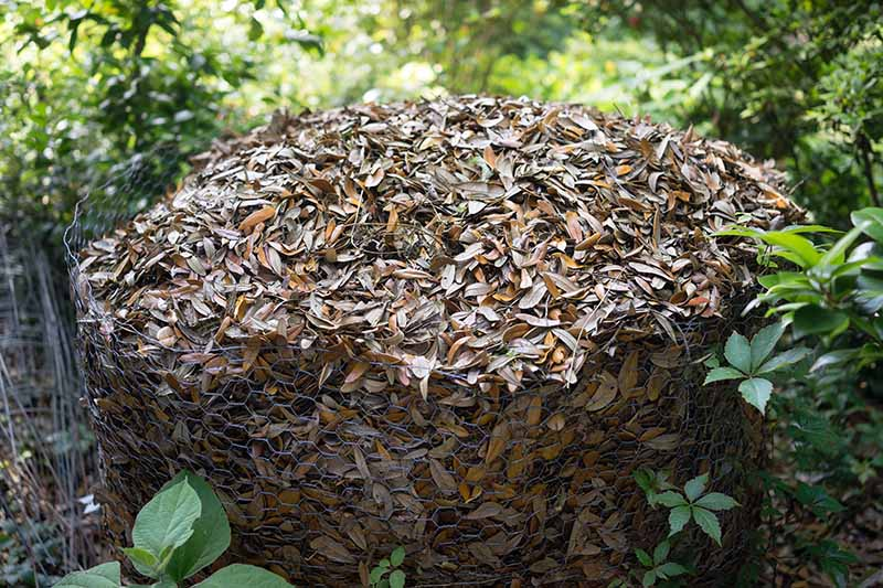 A close up horizontal image of a wire enclosure filled with autumn leaves with foliage in soft focus in the background.