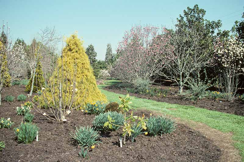 A horizontal image of a garden border with various perennials planted, and mulched with leaf mold, on a blue sky background.