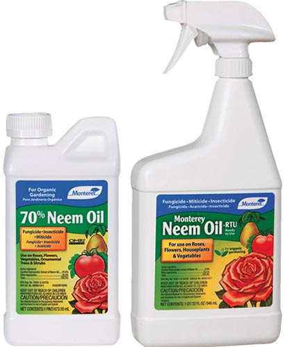 A close up square image of two bottles of Monterey Neem Oil pictured on a white background.