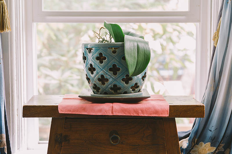 A horizontal image of a blue ceramic plant pot set on a wooden dresser in front of a window.