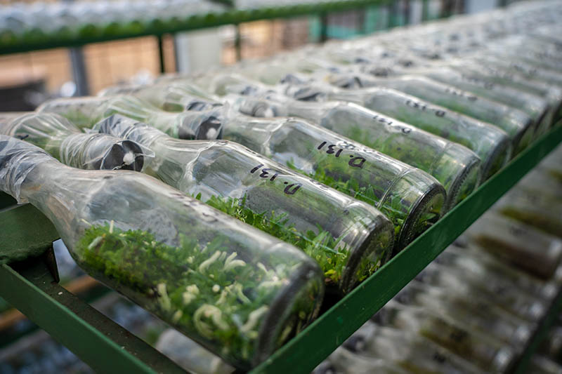 A horizontal image of rows of glass bottles with orchid seedlings growing inside them.