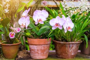 Orchids 101: How to Grow and Care for Orchids