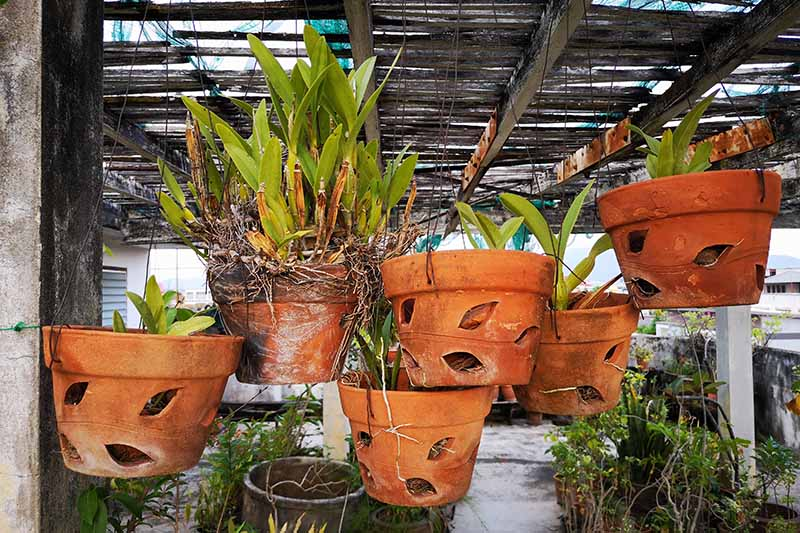 A horizontal image of terra cotta pots with large holes in the sides suspended from a roof in an orchid growing nursery.