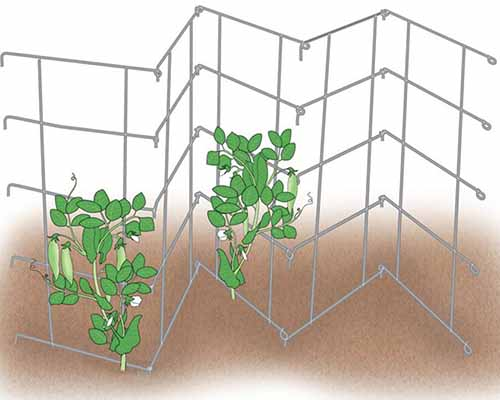 A close up horizontal illustration of a foldable metal panel fence for training peas and other climbing vegetables to grow vertically.