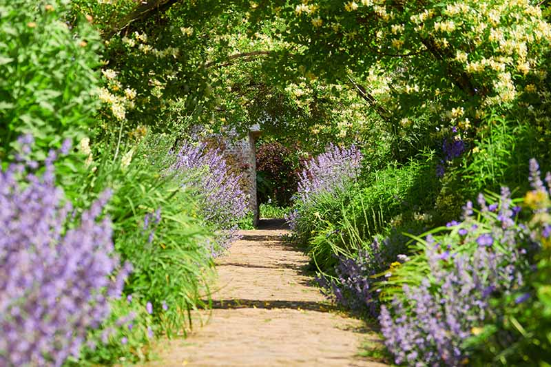 A horizontal image of a garden path between two perennial borders in bright sunshine.