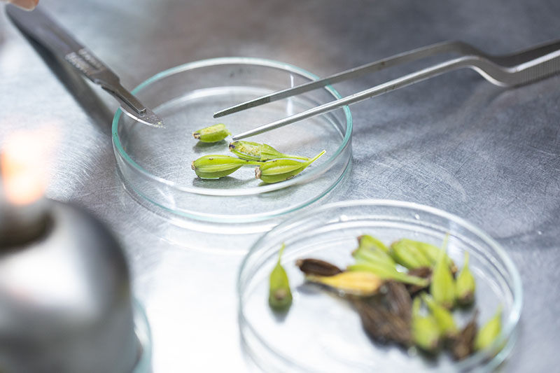 A close up horizontal image of petri dishes with seeds for propagation in a laboratory setting.