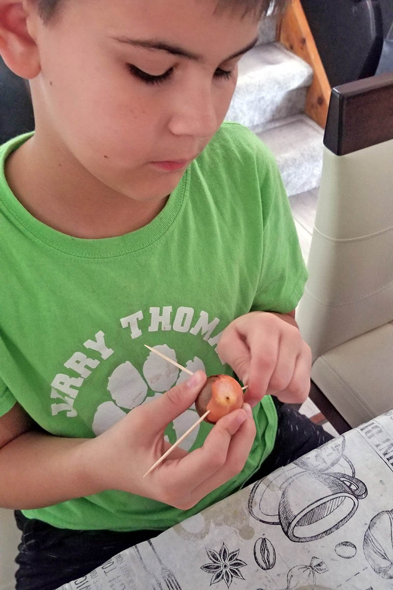 A close up vertical image of a young boy placing toothpicks into an avocado seed for sprouting at home.