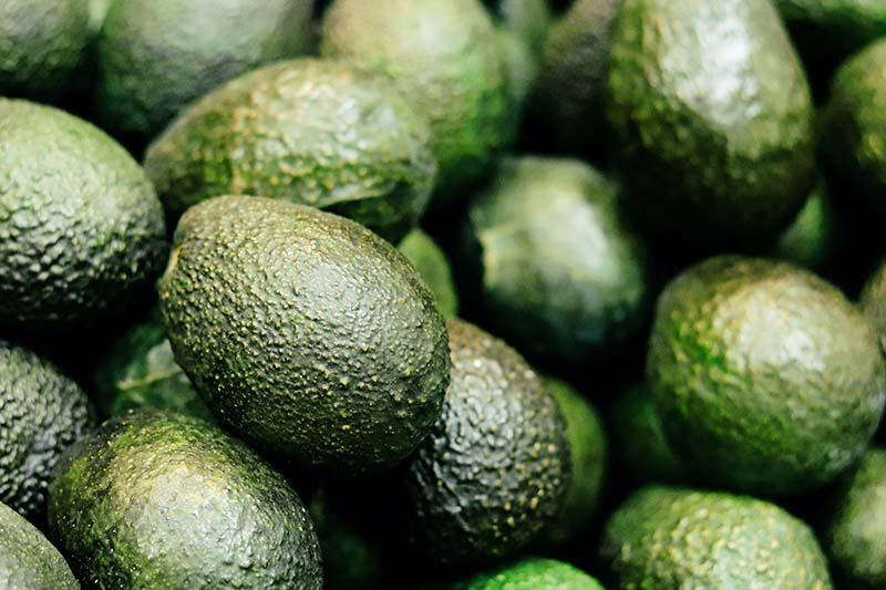 A close up horizontal background image of a large pile of dark green, ripe avocadoes.