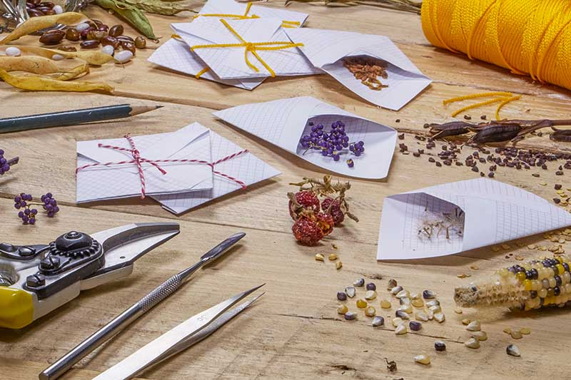 A horizontal image of a table with a variety of paper envelopes for saving and preserving different seeds harvested from the garden.