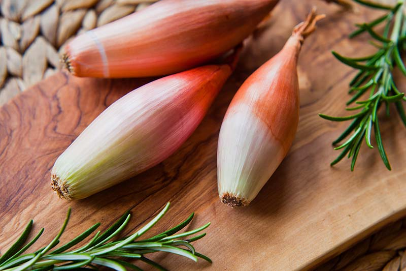 A close up horizontal image of three elongated Allium cepa var. aggregatum set on a wooden chopping board, surrounded by sprigs of rosemary.