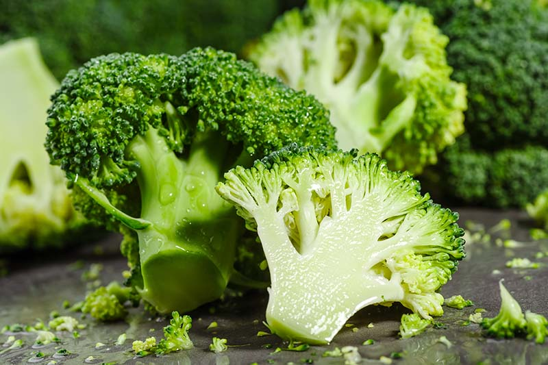 A close up horizontal image of a freshly harvested and washed broccoli head set on a gray surface.