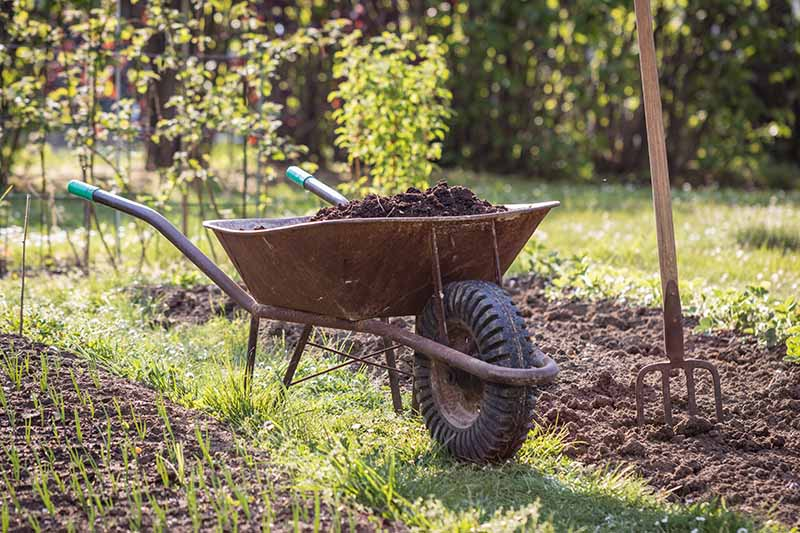 A close up horizontal image of a wheelbarrow with fresh compost in the garden, with a fork to the right of the frame, pictured in light sunshine.