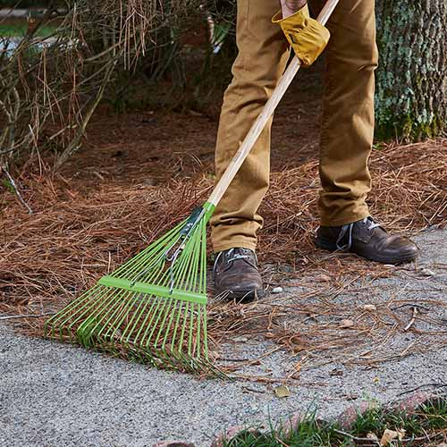 A close up square image of a man wearing light brown slacks and dark brown shoes using an Ames 22 Tine Leaf Rake to clear fallen pine needles from a concrete pathway.