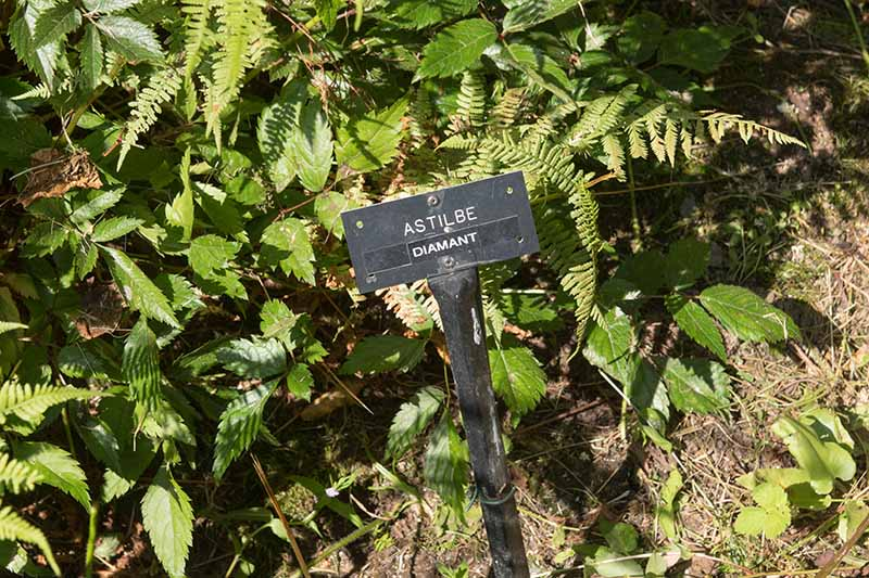 A close up horizontal image of a black plastic plant marker in the garden, pictured in filtered sunshine with perennial shrubs in the background.