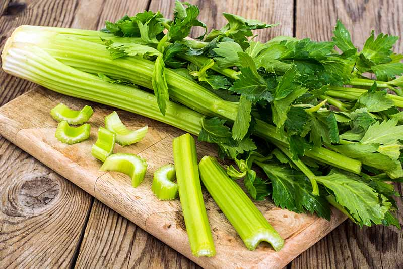 A close up horizontal image of a freshly harvested celery plant set on a wooden chopping board. In the foreground are chopped stalks.
