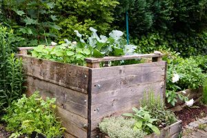 9 of the Best Companion Plants to Grow with Broccoli