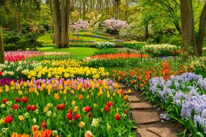 A horizontal image of formal garden borders planted with a variety of different colored spring-flowering bulbs, in full bloom, with a path meandering through it beneath trees.