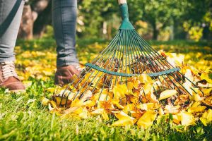 Make Raking Leaves a Breeze: 7 of the Best Leaf Rakes Reviewed