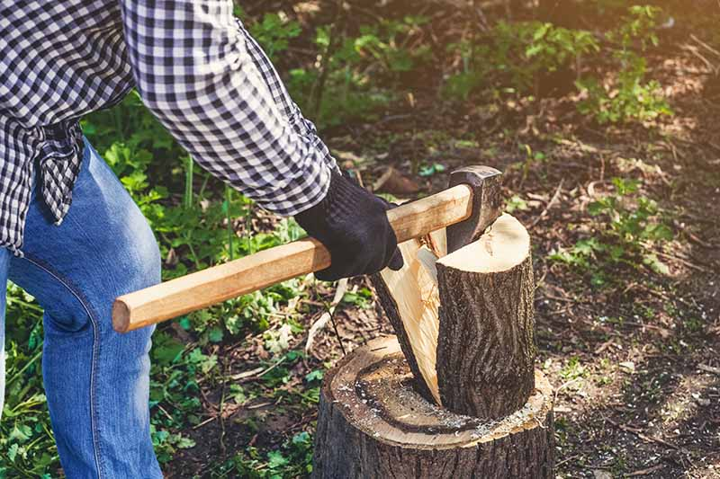 A close up horizontal image of a person using a splitting maul to split firewood pictured in light sunshine on a soft focus background.
