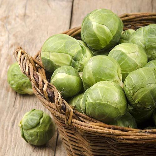 A close up square image of a small wicker basket containing freshly harvested 'Catskill' brussels sprouts set on a wooden surface.