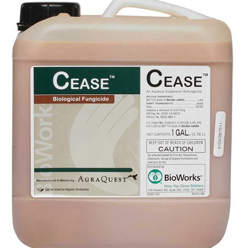 A close up square image of a plastic container of CEASE, a biological fungicide for use on plants.