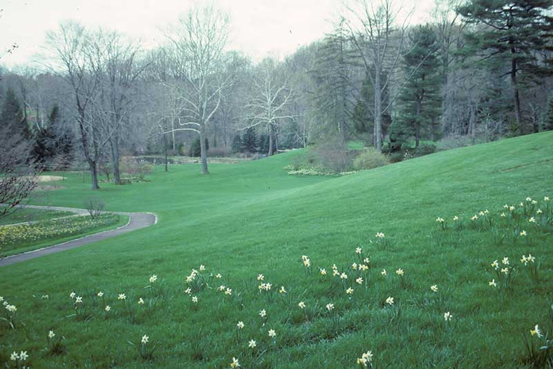 A horizontal image of Chanticleer Garden with large swathes of lawn and trees in the background.