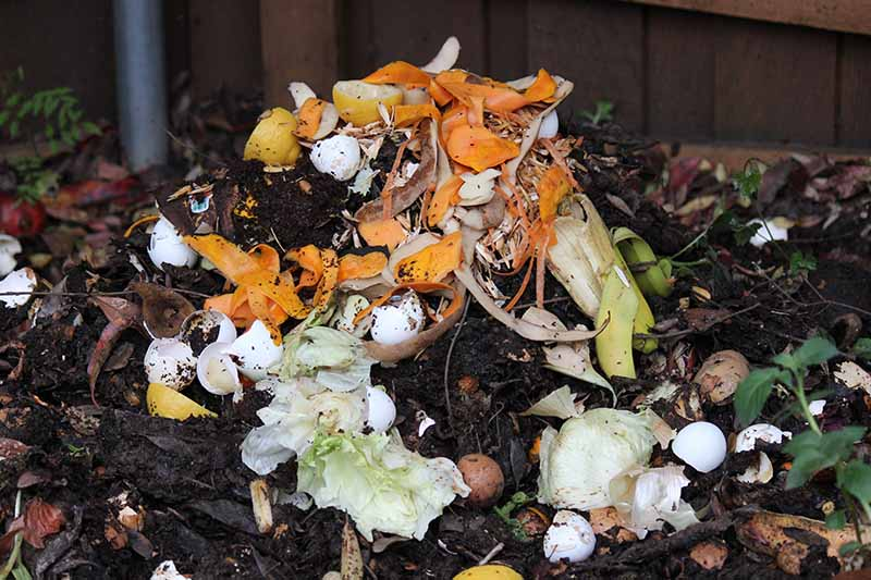 A close up horizontal image of a compost pile with food scraps, it looks quite disgusting actually.